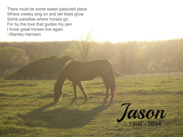 2006 Jason_grazing_late_evening_verse