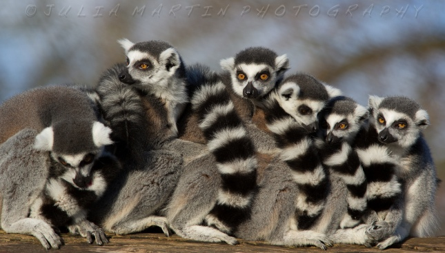 group hug raccoonish things